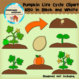 Clipart: Pumpkin Life Cycles - Science - seed - plant