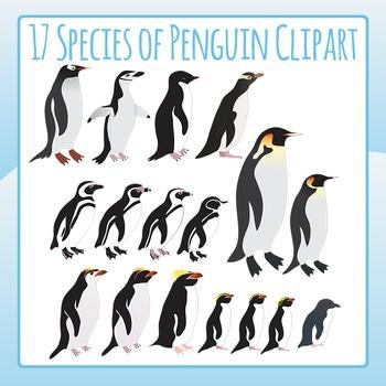 Penguins Species Clip Art Set for Commercial Use