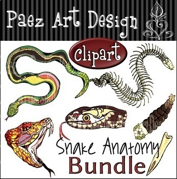 Snake Anatomy Clipart Bundle