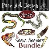 Snake Anatomy Clipart Bundle {Paez Art Design}