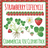 Strawberry Plant Life Cycle Commercial Use Clip Art