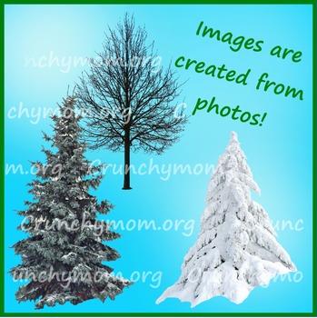 Winter Trees Photo Clip Art