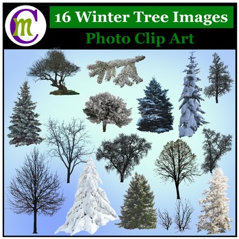 Clipart ♦ Winter Trees Photo Clip Art