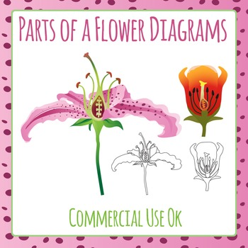 Flower Parts - Biology / Botany Diagrams Commercial Use Clip Art