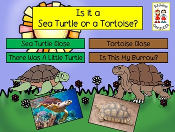 Close Informational Reading - Sea Turtles and Tortoises with Activities