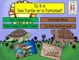 Close Informational Reading - Sea Turtles and Tortoises wi