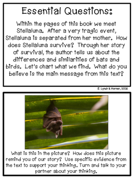 Close Read: Stellaluna