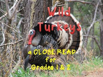 Thanksgiving Activities Wild Turkeys Close Reading with Art Activity