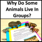 Close Read and Lab: Why Do Animals Live In Groups NGSS 3-LS2-1