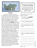 Close Reading 3rd, 4th, 5th, 6th Grade Non Fiction Reading Passages: Polar Bear