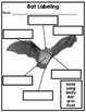 Close Reading: All About Bats
