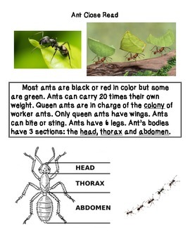 Close Reading ~ Ants: Expository Text