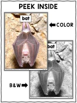 Close Reading Passage - Bat Activities