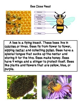 Close Reading ~ Bee: Expository Text