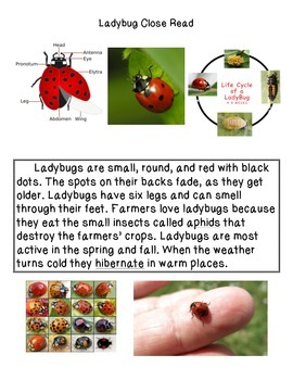 Close Reading ~ Ladybug: Expository Text
