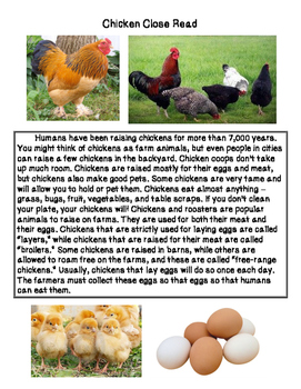 Close Reading ~ Chicken: Expository Text