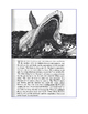 """Close Reading Comprehension Passage & Ques. """"How the Whale Got His Throat"""""""