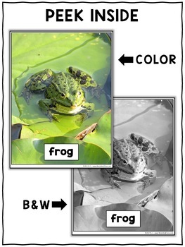 Frog Close Reading Passage Activities