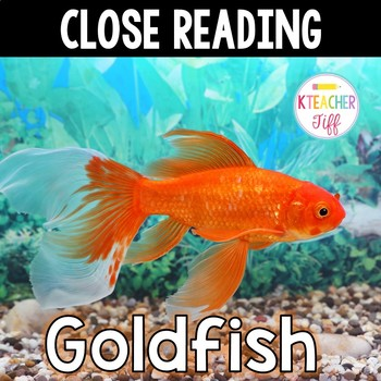 Close Reading:Goldfish