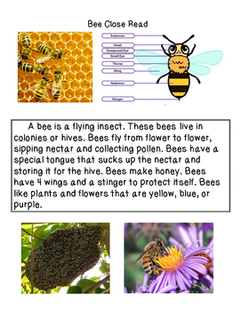 Close Reading ~ Insects Bundle: Expository Text