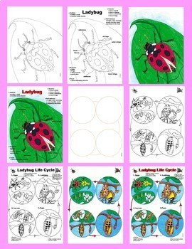 Close Reading: Ladybugs by Gail Gibbons