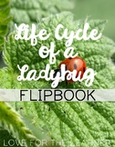 Life Cycle of a Ladybug Flipbook