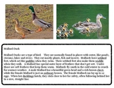 Close Reading ~ Mallard Duck: Expository Text Response and