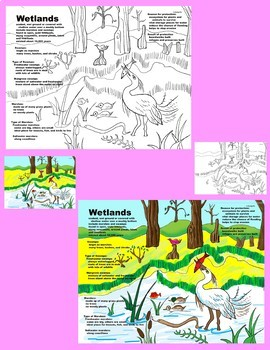 Close Reading: Marshes & Swamps by Gail Gibbons