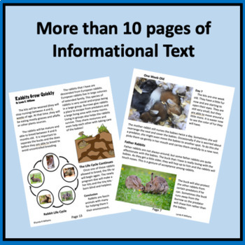 Close Reading Passage on Rabbit Life Cycle