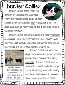 Close Reading: All About Dogs