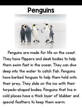 Close Reading: Penguins