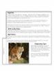 Close Reading - Rainforest Animals