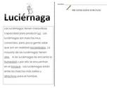 Close Reading SPANISH - Luciernaga
