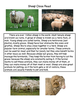Close Reading ~ Sheep: Expository Text