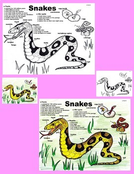 Close Reading: Snakes