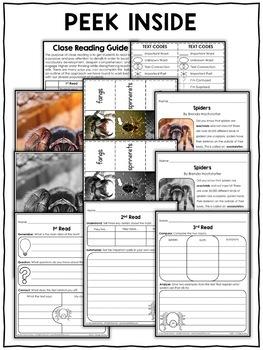 Spider Close Reading Passage Activities
