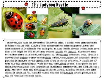 Close Reading ~ The Ladybug: Expository Text Response and Understanding