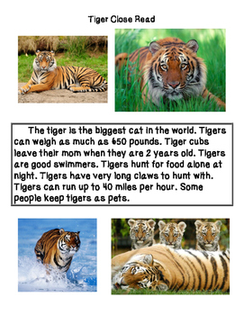 Close Reading ~ Tigers: Expository Text