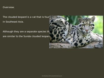 Clouded Leopard - Power Point - endangered animal information facts