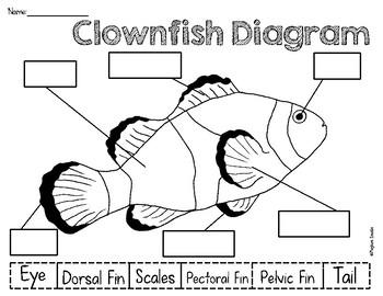 Clownfish Diagram Freebie