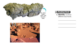 Clues to Earth's Past: Fossils