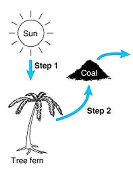 Coal Formation Worksheet