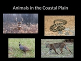 Coastal Plain of Georgia PowerPoint