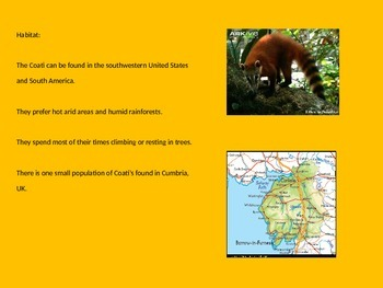 Coati - Power Point Information Pictures Facts