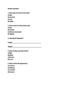 Coati - Rare mammal lesson information facts questions vocabulary