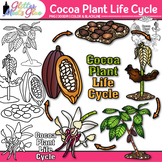 Cocoa Plant Life Cycle Clip Art | Fall Plant Graphics for Science Activities