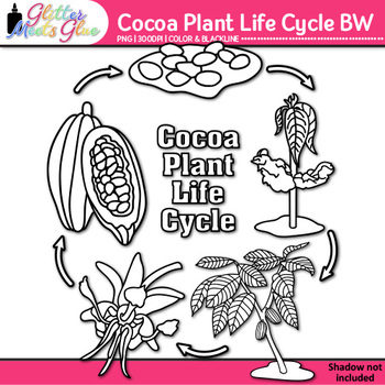 Cocoa Plant Life Cycle Clip Art {Fall Plant Graphics for Science Activities} B&W