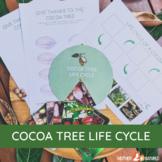 Cocoa Tree Life Cycle   CHOCOLATE LIFE CYCLE   Cocoa Print
