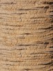 Coconut Tree Paper Craft Printable