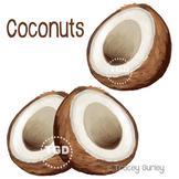 Coconuts - coconut clip art, coconut Printable Tracey Gurley Designs